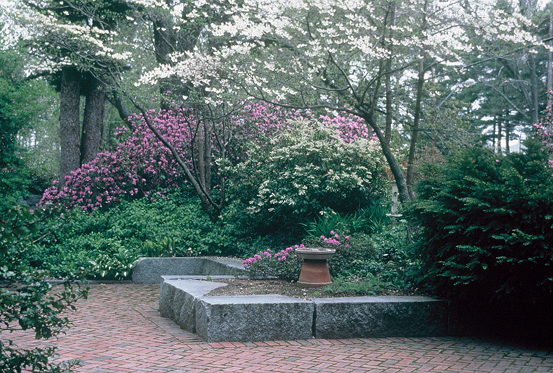 How To Create Large Lush Private Low Maintenance
