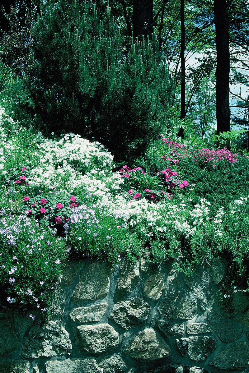 How to Create Large, Lush, Private, Low-Maintenance Landscapes