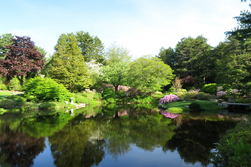 The Asticou Azalea Garden was created in 1957 by Charles K. Savage